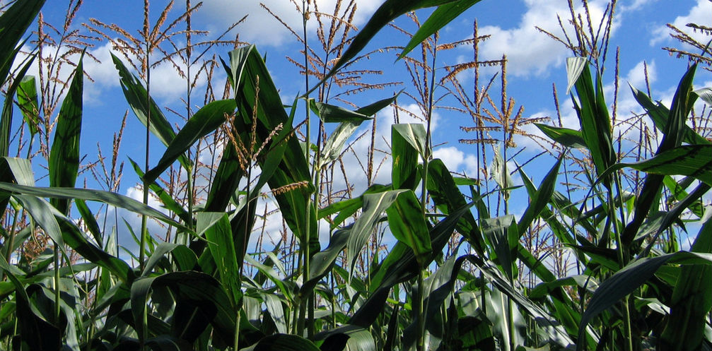 Statement on Media Reports of a Settlement in Syngenta Corn Litigation