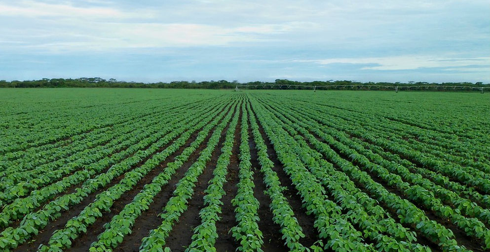 Federal Dicamba Lawsuits to be Heard in St. Louis